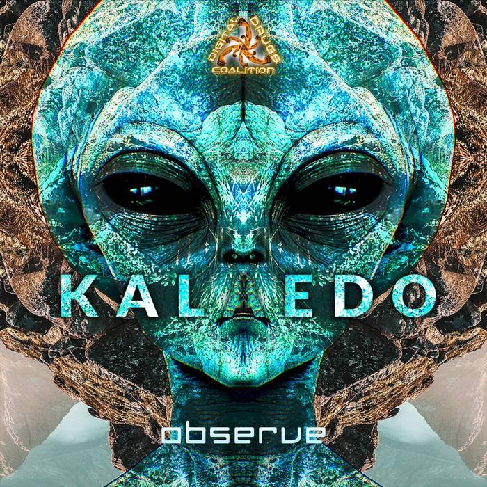 Digital Drugs Coalition - KALAEDO - Observe