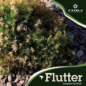 Flow Records - .Various - Flutter