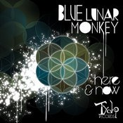 Tycho Records - BLUE LUNAR MONKEY - Here and Now